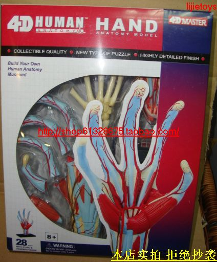 4d master 4d yakuchinone human body assembling model hand model